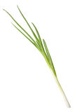 Single spring onion Royalty Free Stock Images