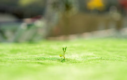 Single sprout Royalty Free Stock Image
