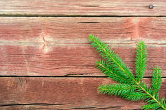 Single spruce twig Stock Image