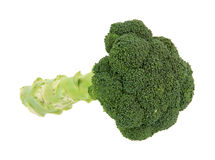 Single stalk broccoli. An interesting view of a single stalk of fresh broccoli Stock Images