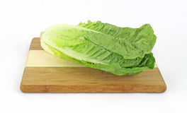 Single Stalk Romaine Lettuce Royalty Free Stock Photography