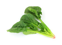 Single Stalk Spinach. A graceful view of a single stalk of spinach Stock Photography