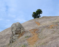 Single stand of trees. Rough path leading to a lonely tree in a barren landscape royalty free stock photos