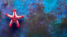 Single starfish in a aquarium royalty free stock images