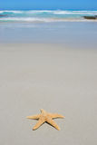 Single starfish on beach Royalty Free Stock Photos