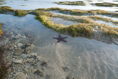 Single Starfish is lying underwater on the Sand Royalty Free Stock Photo