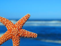 Single Starfish Peeking from the Edge Stock Image