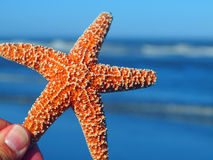 A Single Starfish Peeking from the Edge Stock Photo
