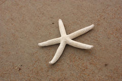 Single starfish Royalty Free Stock Photos