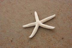 Single starfish Royalty Free Stock Photos