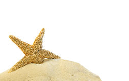 Single starfish on a sand hill Royalty Free Stock Photography