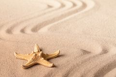 Single starfish on sandy beach royalty free stock images