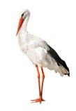 Single stork isolated on white Royalty Free Stock Photos