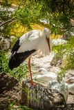 Single stork in a zoo Stock Images