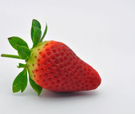 Single strawberry against blue background Stock Photography