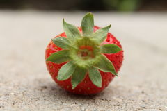 Single strawberry focusing on leaves Stock Photography