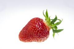 Single strawberry Stock Image