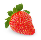 Single strawberry fruit Royalty Free Stock Photo
