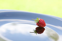 Single strawberry on plate Royalty Free Stock Photo