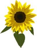 Single sunflower illustration royalty free illustration