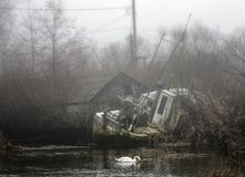A single swan in a dirty pond next to an abandoned boat and a creepy cabin