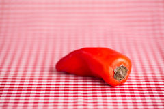 Single Sweet Bell Pepper on Red Gingham Tablecloth Royalty Free Stock Image