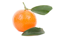 Single tangerine with leaves Royalty Free Stock Image