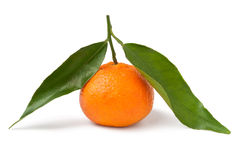Single tangerine with leaves Stock Images