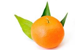 Single tangerine or mandarin isolated Royalty Free Stock Photos