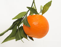 Single tangerine on white Stock Photos