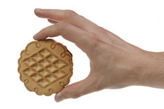 Single tasty cookie in man's hand. Royalty Free Stock Photography