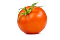 Single tomato Stock Photography