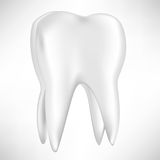 Single tooth Stock Image