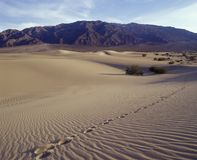Single track of footsteps in ; Death Valley National Park.  Mequite Flats Sand Dunes Royalty Free Stock Photos