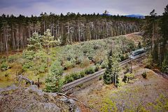 Single track number 080 with train leading mysterious pine forest in Machuv kraj region in czech republic Royalty Free Stock Photography