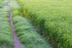 Single track road path grass Stock Image