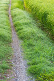 Single track road path grass Stock Images