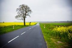 Single track road rural Royalty Free Stock Photo