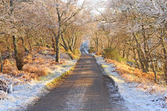Single track road in winter. stock photography