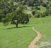 Single track trail Stock Image