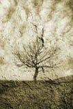 Single tree Royalty Free Stock Photo