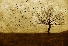 Single tree. On grunge concrete background of sepia royalty free stock image