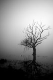 Single tree. Close to the edge of a lake-Black and white image stock photo