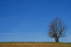 Single Tree. Lonely tree on the empty green field in spring Royalty Free Stock Photography