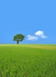 A single tree Royalty Free Stock Photos