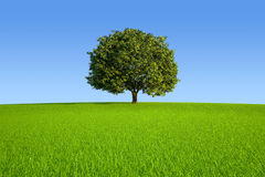 Single Tree. On meadow hill Royalty Free Stock Images