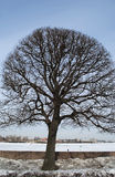 Single tree. Royalty Free Stock Images