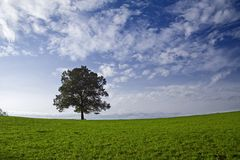 Single tree. In countryside,summer landscape royalty free stock photos
