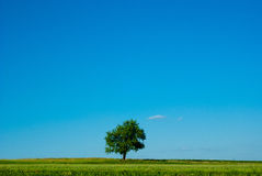 Single tree. An single tree on a grass field Stock Photos