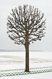 Single tree Royalty Free Stock Images